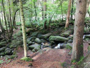 Ausflug Höllbachtal